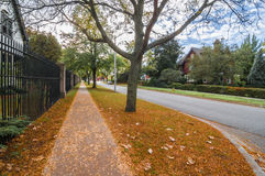 Street Fall scene. Along the street of windsor ontario royalty free stock images