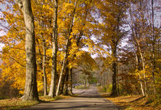 A street in the fall season Royalty Free Stock Image