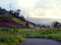 Street in farming Stock Image