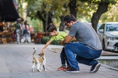 Father and son play with cute street cat. In the street, father and son play with cute street cat, very warm moment royalty free stock photo
