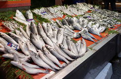 Street fish market in Istanbul Stock Image