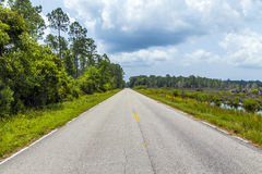 Street through the florida swamp on. A warm summer day royalty free stock photography
