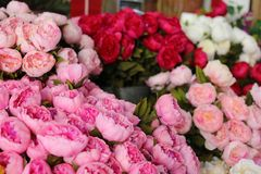 Street florist in South France, colorful fresh flowers in the main street of Cannes. royalty free stock photos