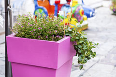 Street flower decoration in Sanremo,Italy. Pink clay pot with flowers on sidewalk in Sanremo,Italy Stock Photos