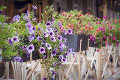 Street flower decoration Royalty Free Stock Photography