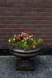 Street flower pot Royalty Free Stock Images