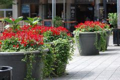 Street with flower pots. Urban landscaping Royalty Free Stock Photography