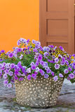 Street with flower pots Royalty Free Stock Photo