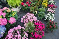 Street flower shop Stock Images