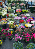 Street flower shop Stock Image