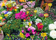 Street flower shop stock photography