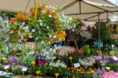 Street flower shop with colourful flowers Royalty Free Stock Photos
