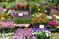 Street flower shop with colourful flowers Royalty Free Stock Photography