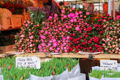 Street flower shop with colourful tulip bouquets Royalty Free Stock Photo