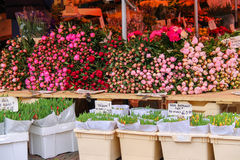 Street flower shop with colourful tulip bouquets Royalty Free Stock Photos