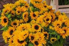 Street flower shop with sunflower bouquets Stock Images