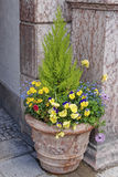Street flowerbed bowl with blooming flowers Royalty Free Stock Photography