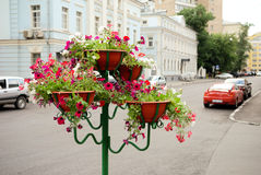 Street flowerpot set. With red flowers royalty free stock photography
