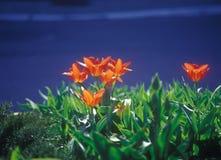 Street flowers. Stock Image