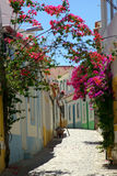 Street With Flowers. In Portuguese Village Stock Images