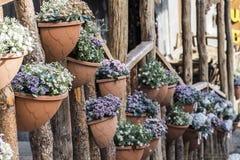 Street flowers Stock Photography