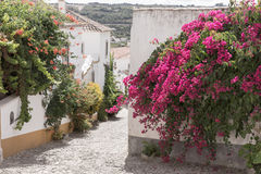 Street with flowers in Obidos Royalty Free Stock Photos