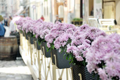 Street flowers Stock Photography