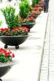 Street flowers in a row Stock Photos