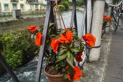 Street flowers in Treviso. Street flowers among the canal in Treviso, Italy Royalty Free Stock Photo