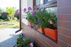 Street flowers on the window in the pots. royalty free stock photography