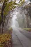 Street in the fog. A street in the fog Royalty Free Stock Photo