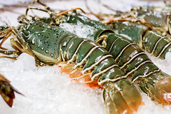 Street food in Asia spiny lobsters close-up Royalty Free Stock Images