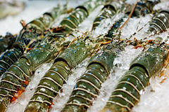 Street food in Asia spiny lobsters close-up Royalty Free Stock Image