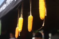 Street food festival. Close up of hanging corn decoration stock photography