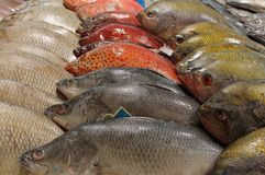 Street food fish stall Thailand fishmonger Stock Photography