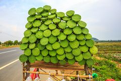Street Food of Fresh Lotus Fruit Is Displayed for Sale along a H Royalty Free Stock Image