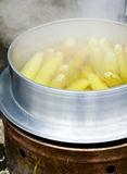 Boiling corn cobs Royalty Free Stock Photo