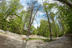 Street in the forest. Campulung. Fish-eye shot Stock Photography