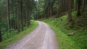 Street through forest stock photography