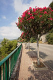 Street in France in Roquebrune, near Monaco, with blooming trees Stock Photography