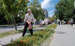 Street gardener. Royalty Free Stock Photo