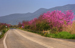 Street in Greece. In spring with flowers blooming royalty free stock image