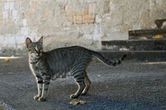 Street Grey Cat Stock Photo