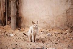 Street homeless cat Stock Photos