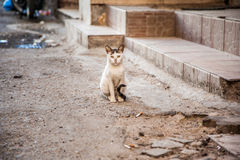 Street homeless cat Royalty Free Stock Images