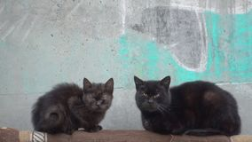 Street homeless cats siting. Street homeless cats siting, sick animals stock footage