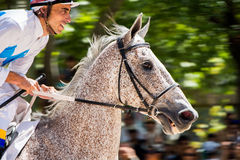 Street horse racing in Madrid Royalty Free Stock Images