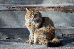 Street houmless cat in the sunny day stock images