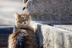 Street houmless cat in the sunny day stock photography