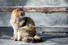 Street houmless cat in the sunny day royalty free stock photo